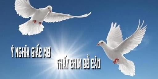 Chim bồ câu là biểu tượng của hòa bình và hạnh phúc