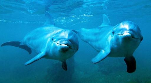 Nên đánh con gì khi mơ thấy cá heo?
